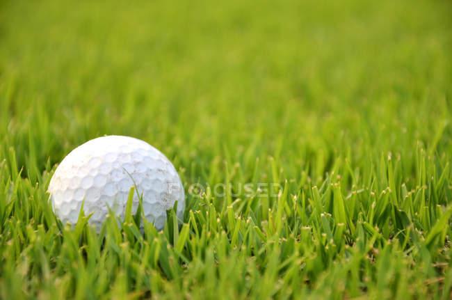 Мяч для гольфа в траве — стоковое фото
