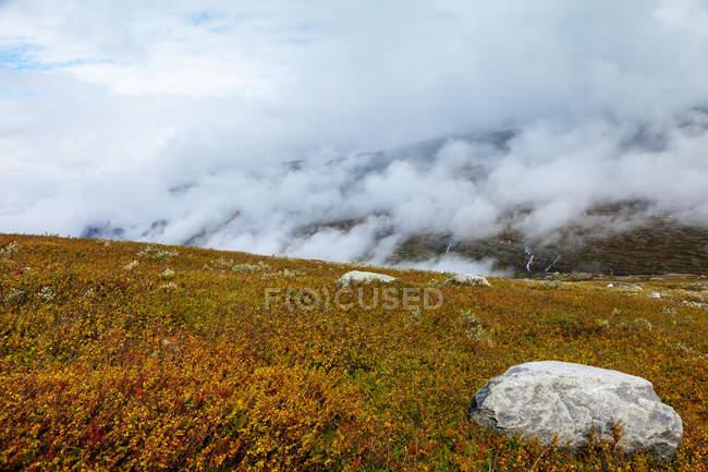 Pré de la colline en Norvège — Photo de stock