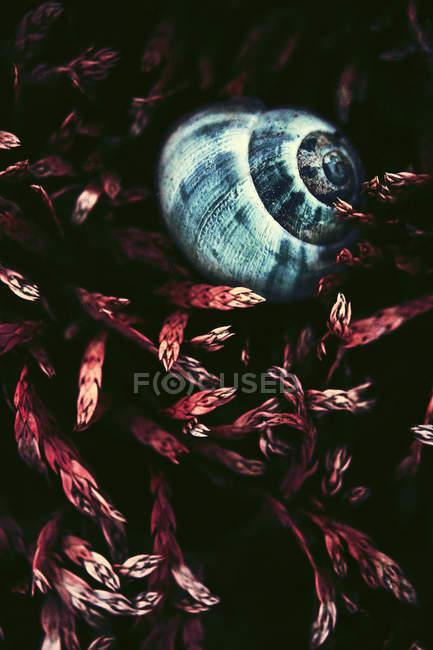 Primo piano delle coperture della lumaca in pianta ramoscelli — Foto stock