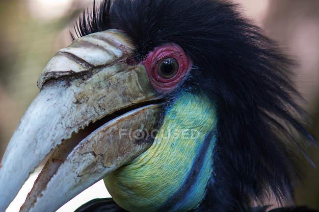 Крупным планом вид головы птицы калао — стоковое фото