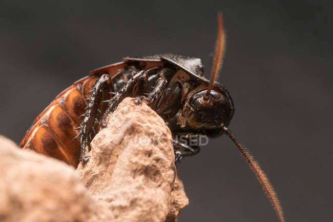 Крупным планом вид коричневого Жук насекомых на топляк — стоковое фото