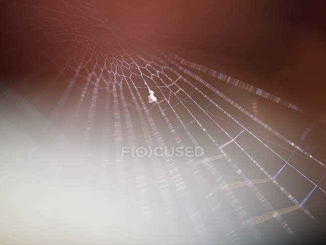 Closeup vista da teia de aranha — Fotografia de Stock