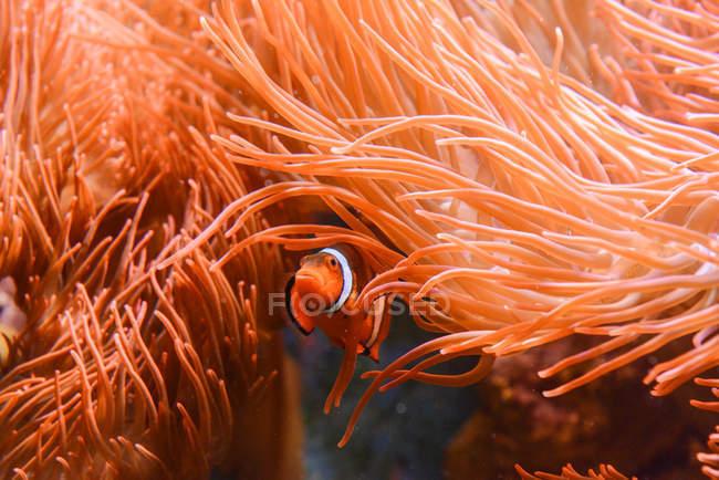 Рыба, плавание под водой — стоковое фото