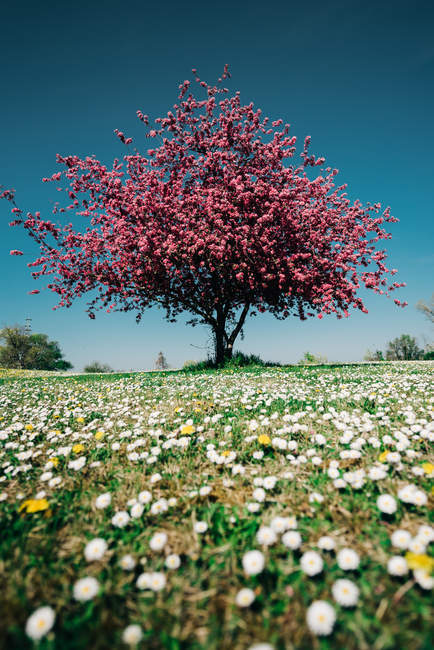 Blooming wild flowers and blossoming tree — Stock Photo