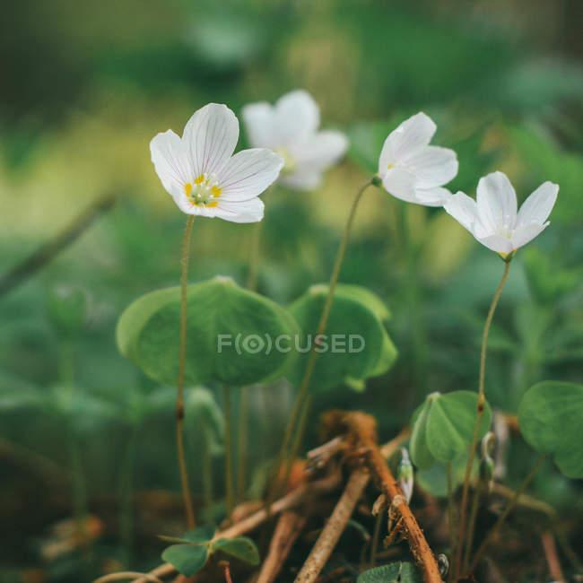 Крупным планом вид цветущих диких цветов — стоковое фото