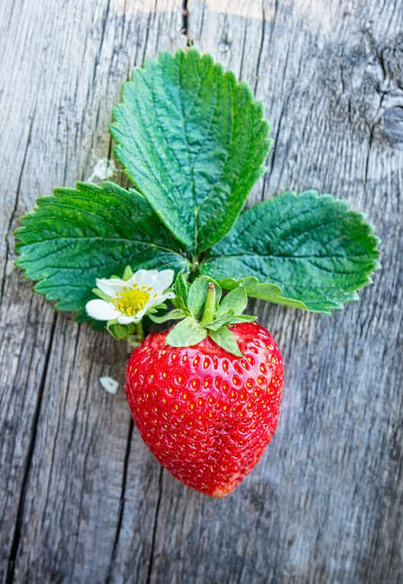 Fresh strawberry with green leaves — Stock Photo