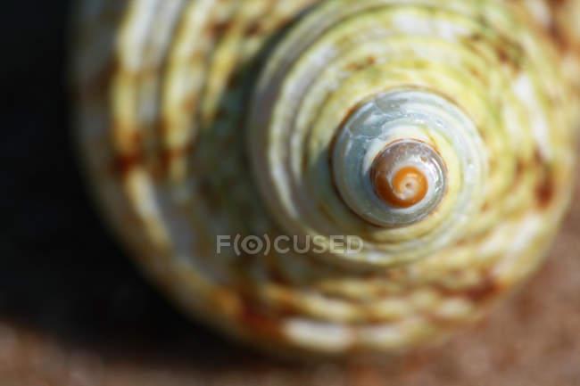 Vista delle coperture della lumaca — Foto stock