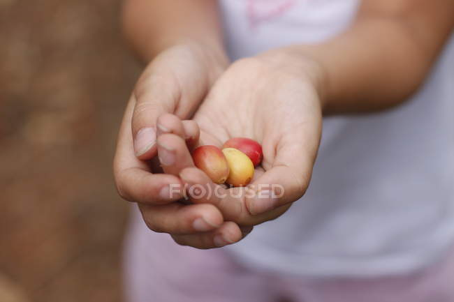 Child hands holding coffee beans — Stock Photo