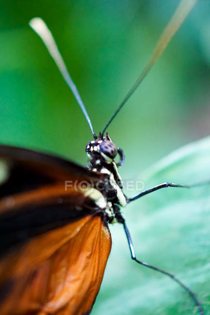 Крупным планом вид насекомых бабочка — стоковое фото