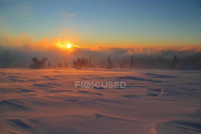 Солнечная установка лес — стоковое фото