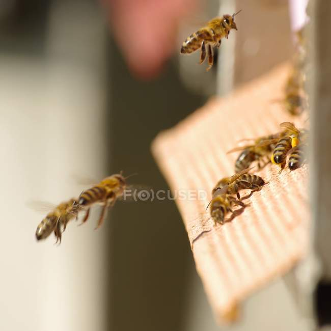 Bees flying to hiver - foto de stock