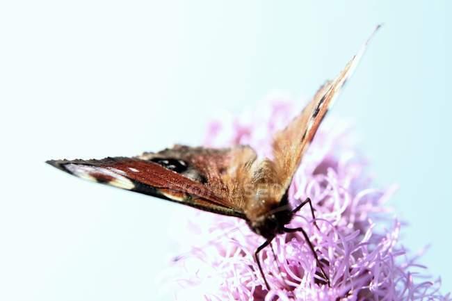 Farfalla Con Le Ali Colorate Fauna Selvatica Da Colorare Stock