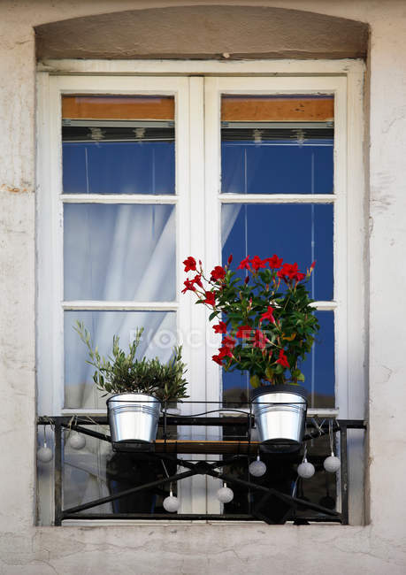 Growing houseplants in metallic pots on windowsill — Stock Photo