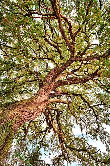 Tronco y ramas con hojas verdes - foto de stock