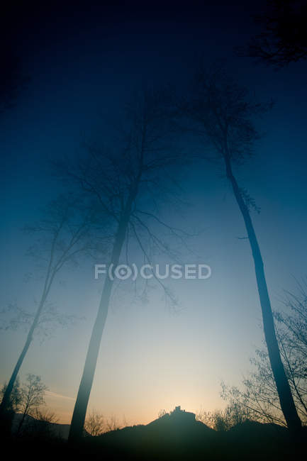 Trees in sunset light and fog — Stock Photo
