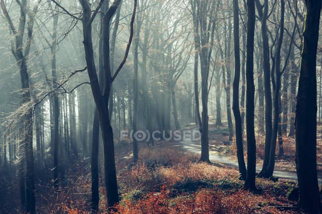Лес в осеннее время — стоковое фото
