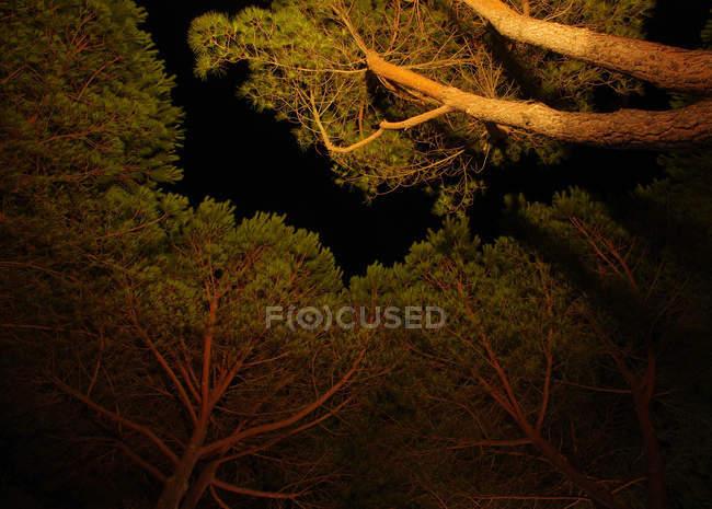 Зелений ліс в nigt — стокове фото