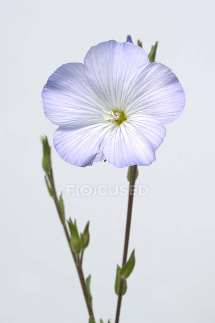 Blooming flower on white — Stock Photo
