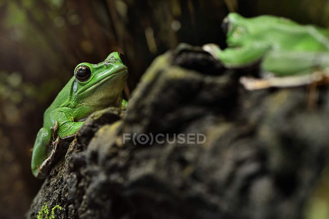 Small frog view — Stock Photo