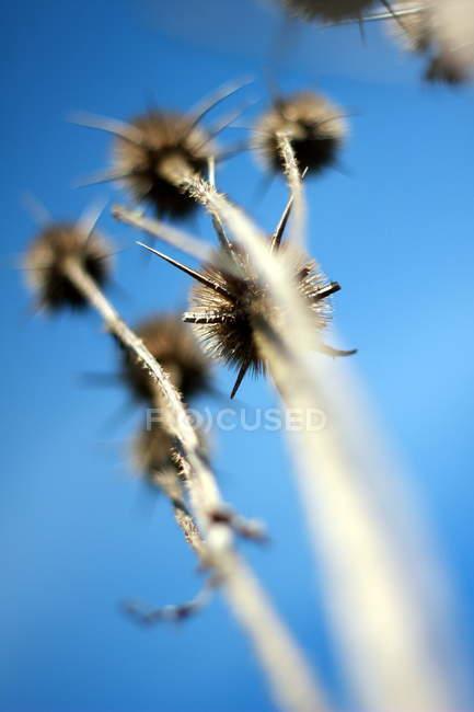 Closeup vista de planta herbácea selvagem crescimento ao ar livre — Fotografia de Stock