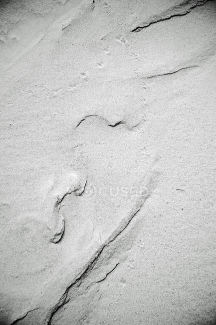 View of animal tracks on sand — Stock Photo