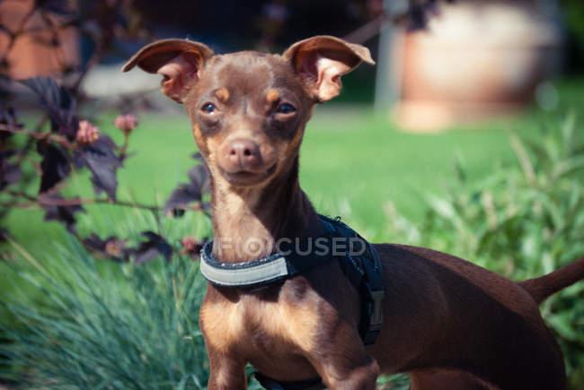 Dog looking at camera — Stock Photo