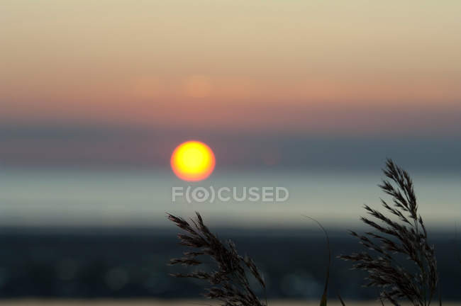 Wild herbs silhouettes in sunset light — Stock Photo