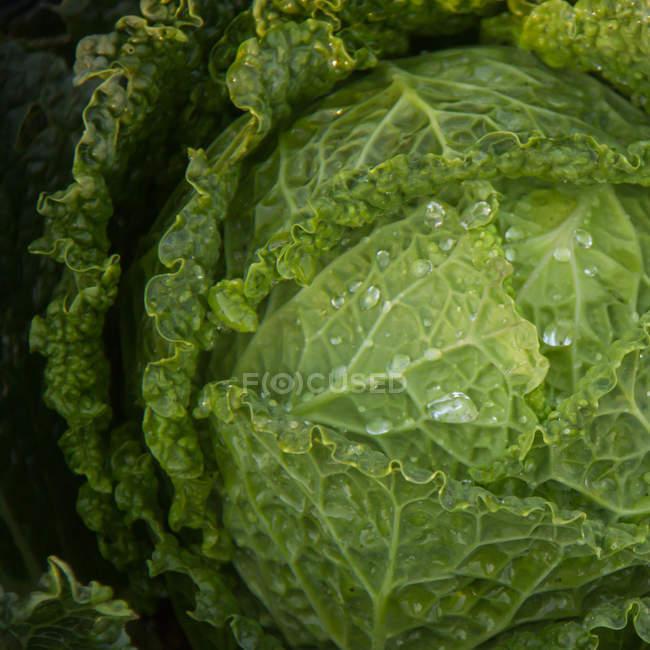 Grünen nassen Salatblätter — Stockfoto