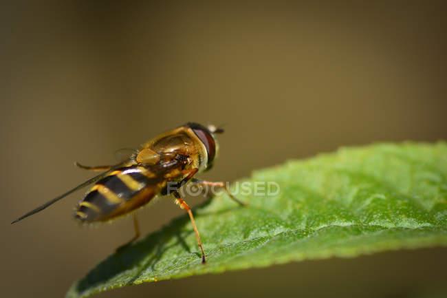 Bee sitting on green leaf — Photo de stock