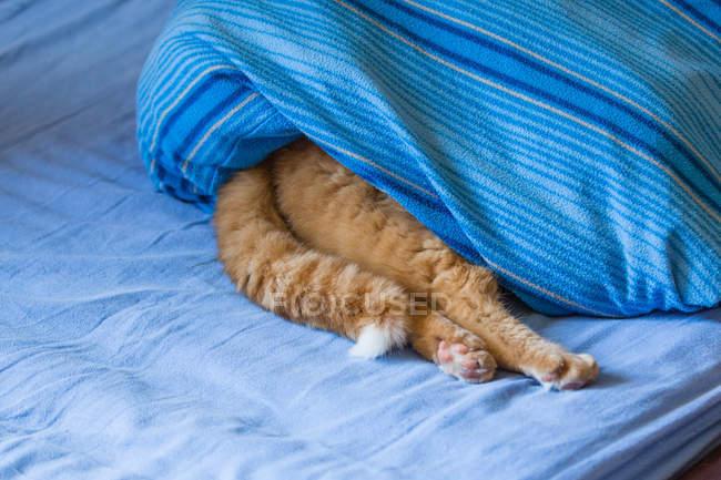 Ingwer-katze auf dem bett schlafen — Stockfoto