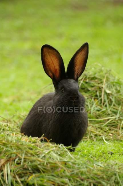 Крупным планом вид кролика на зелёный луг — стоковое фото