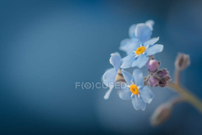 Closeup view of blooming wildflower plant — Stock Photo