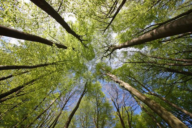 Vista inferior de floresta verde — Fotografia de Stock