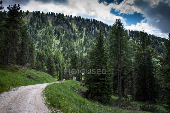 Road in the summer forest — Stock Photo