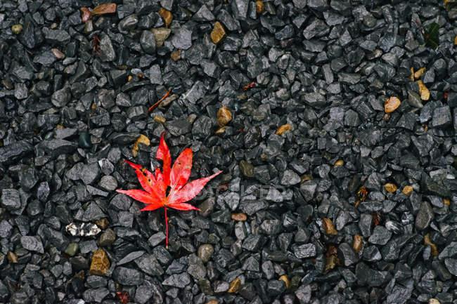 Outono folha de bordo no cascalho — Fotografia de Stock