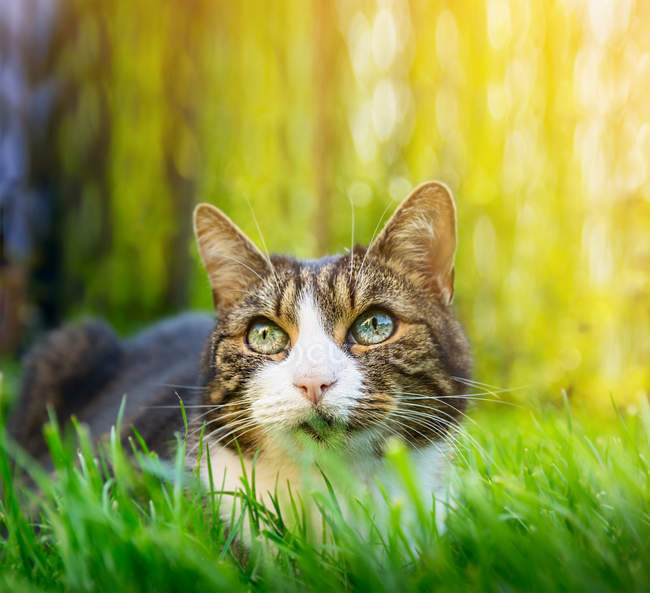 Striped cat sitting in grass — Stock Photo