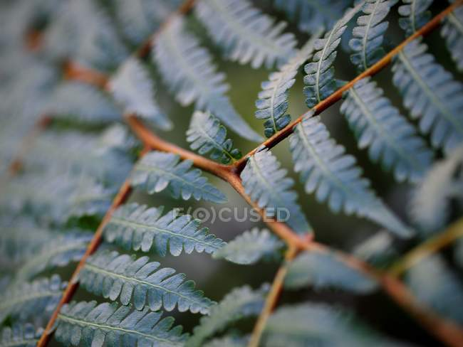 Ramos jardim arbusto com folhas — Fotografia de Stock