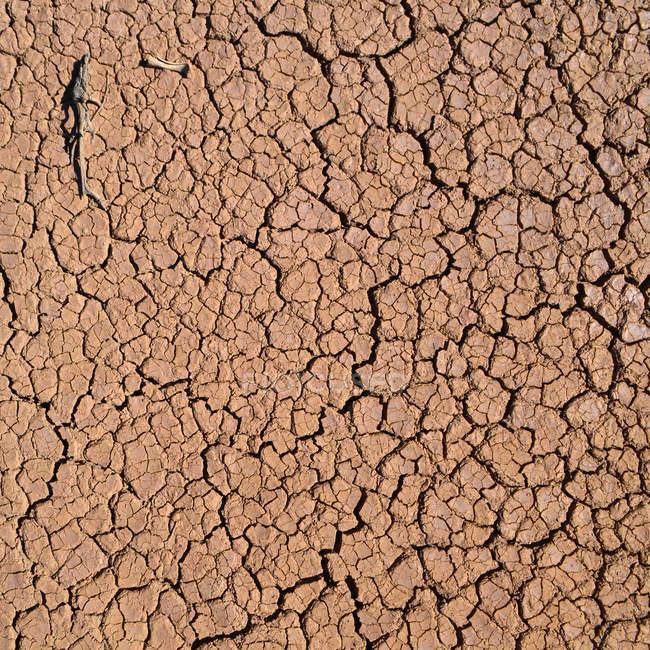 Arid ground of desert, surface — Stock Photo