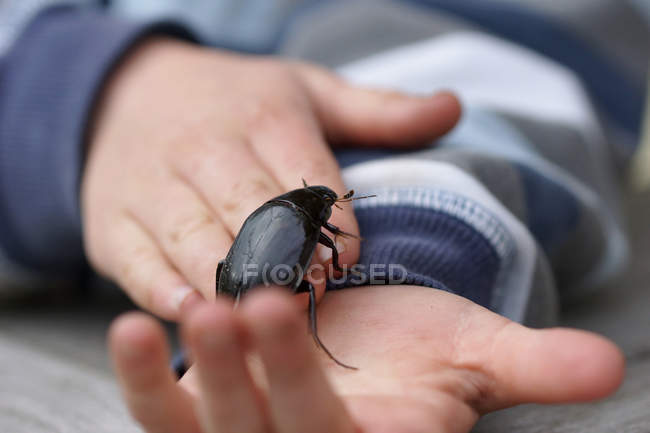 Cropped view of person hand holding beetle — Stock Photo