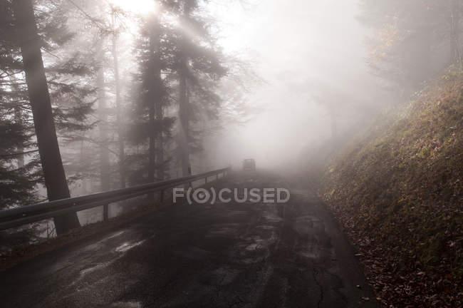 Strada attraverso la foresta in sole tempo nebbioso — Foto stock