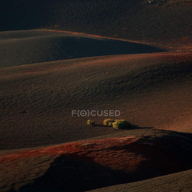 Grassy hills at sunset, Fuego mountains, National Park of Timanfaya, Lanzarote, Spain — Stock Photo