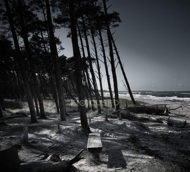 Bench on the seaside and trees — Stock Photo