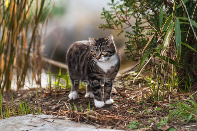 Daytime view of cat standing near bushes outdoors — Stock Photo