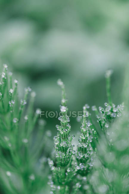 Grass stems with dew drops — Stock Photo