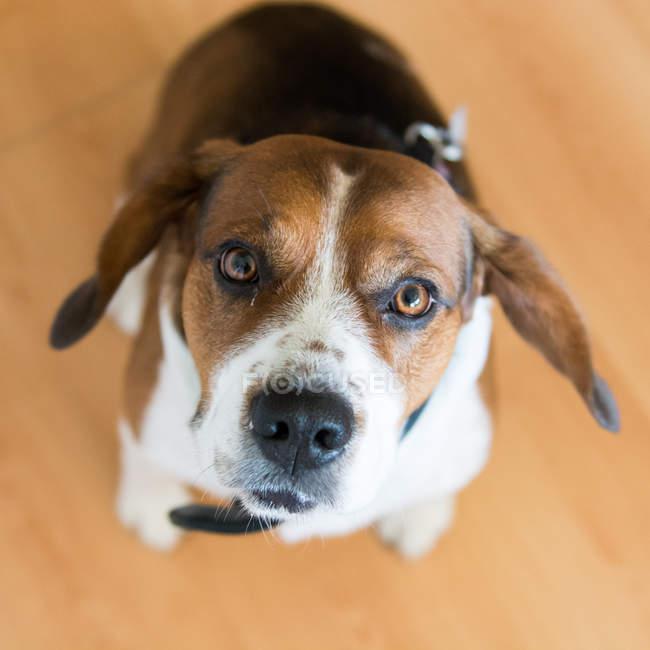 Cachorro olhando para a câmera — Fotografia de Stock