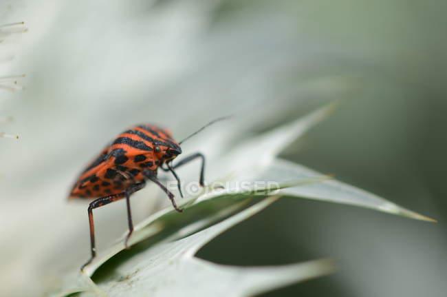 Detailansicht des Bug kriechen auf grüne Pflanze Blatt — Stockfoto
