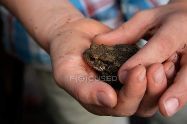 Close-up view of person hands holding toad — Stock Photo