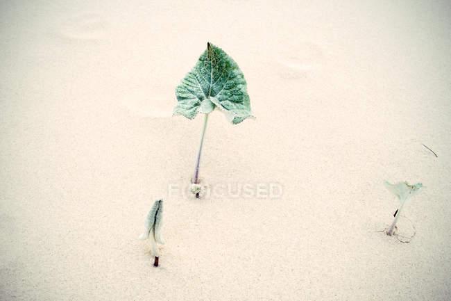 Folha de planta na areia — Fotografia de Stock