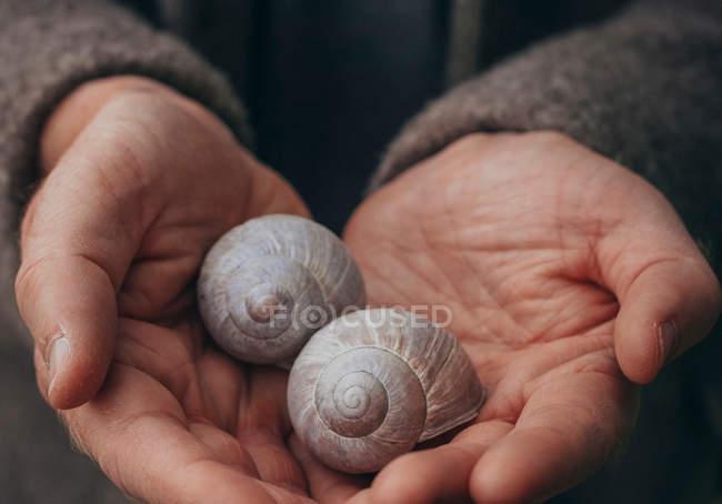 Людські руки, що тримає раковин равликів — стокове фото