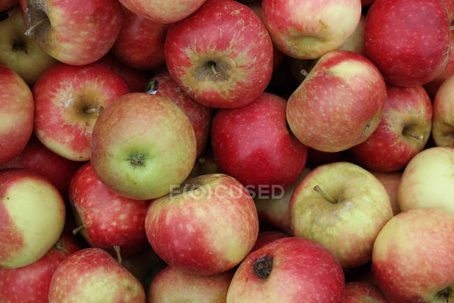 Close-up view of ripe apples — Stock Photo